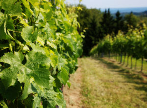 Romantic vineyard tours
