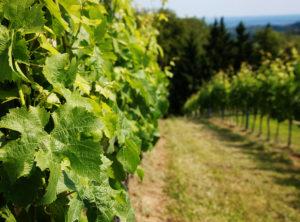 Romantic vineyard tours