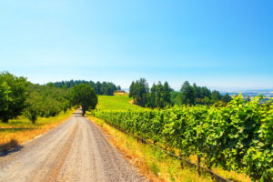 Oregon Wine Passport to vineyard on country road on sunny day